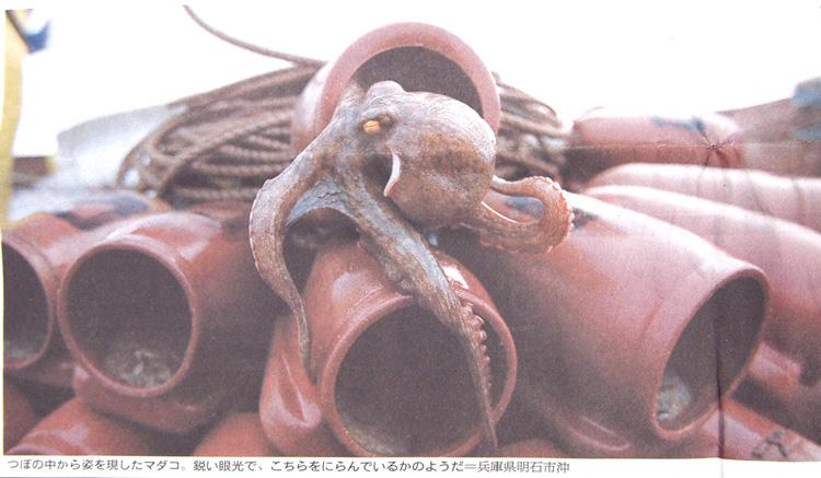 Asahitakoblog5